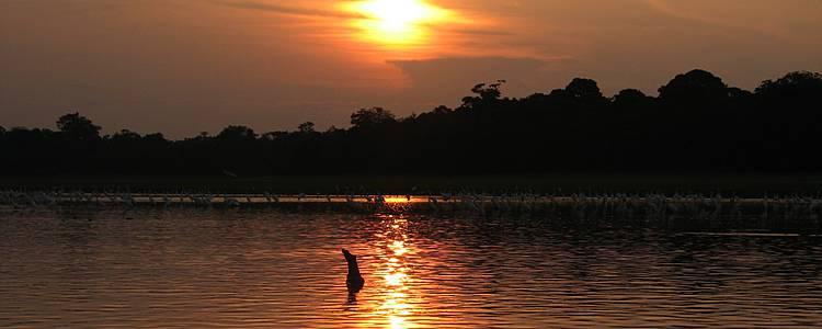 Amazzonia e relax