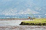Le lac Tanganyika