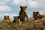 Le Parc de Serengeti