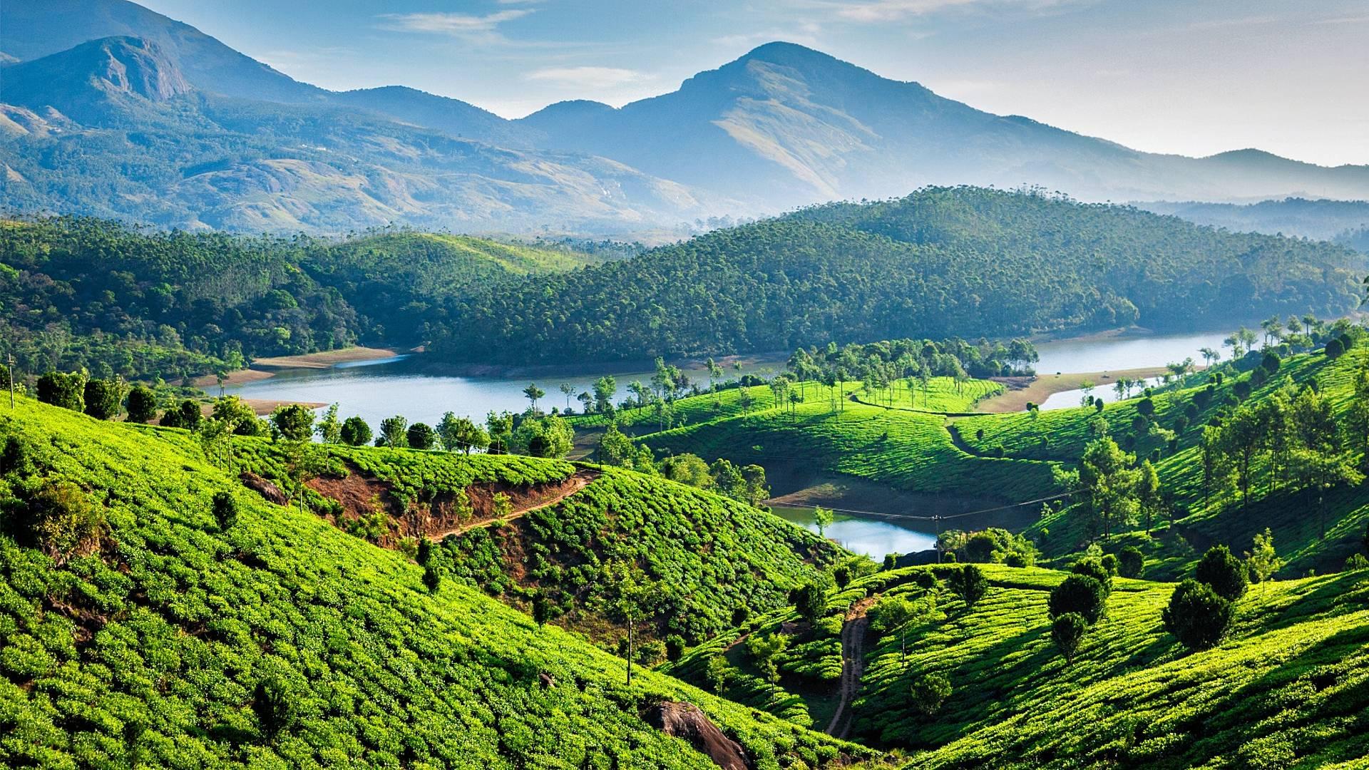 Hoch zu Rad durch Keralas verträumte Teelandschaften