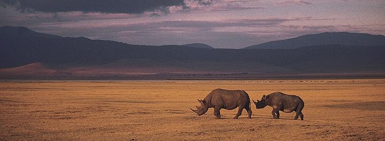 Découvrez des paysages époustouflant lors de votre Safari en Tanzanie!