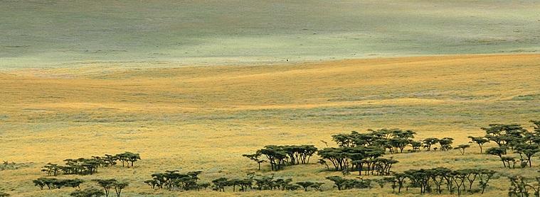 Les plaines Tanzaniennes... grandioses!