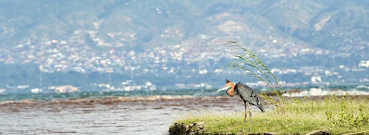 Le Lac Tanganyiaka, réservoir de biodiversité et frontière