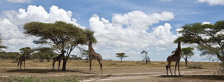 Vous ne saurez plus où donner de la tête devant une telle abondance d'animaux sauvages!