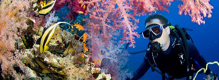 Plongez au cœur des récifs coralliens