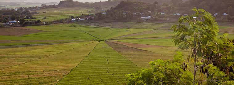 Champs en toile d'araignée, tradition agricole du peuple Manggarai
