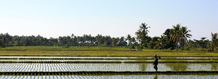 Découvrez l'Indonésie à travers un guide francophone pour le vous imprégner au mieux de sa culture