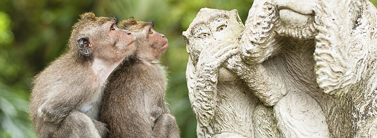 Soyez malin comme un singe et préparer votre voyage en Indonésie à l'aide de ce guide pratique !