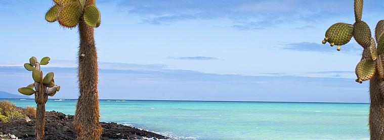 Les Galapagos, destination paradisiaque en Equateur!