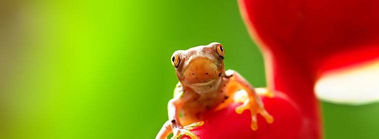 Flore et faune du Costa Rica