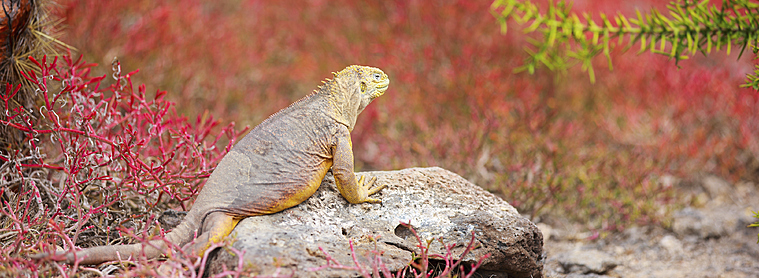 La faune et la flore Equatorienne vous en feront voir de toutes les couleurs !