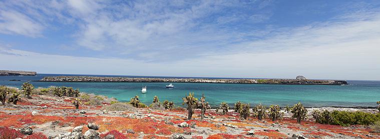 Entre mer bleue turquoise et terre volcanique, partez explorer les îles Galapagos lors de votre voyage en Equateur !