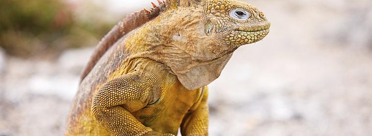 En Equateur, partez à la découverte d'une faune et d'une flore endémique et diverse !