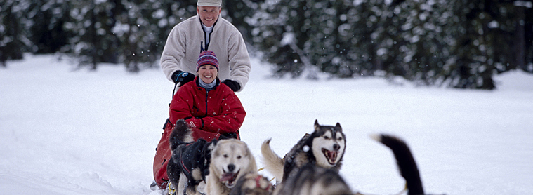 Que vous partiez une semaine, dix jours ou 3 semaines, le chien de traîneau est incontournable lors d'un voyage en Finlande