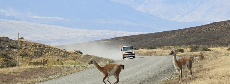 Durant votre road trip en voiture vous croiserez la faune et la flore sauvage d'Argentine de prêt !