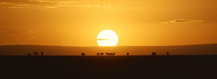Partir en Afrique : Découvrez les paysages exceptionnels de ce continent.