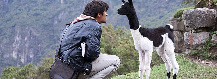 Le lama, nouvel ami du voyageur au Pérou