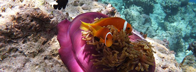 N'oubliez pas votre appareil photo waterproof pour immortaliser la beauté des fonds marins des Maldives !