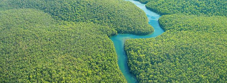 L'Amazonie, le poumon de la terre, Brésil