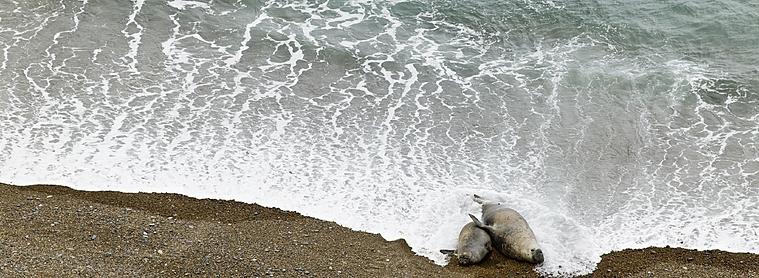 Il y a de la place pour tout le monde sur les plages de la Patagonie Atlantique (par contre il faut être d'accord pour avoir comme voisin de serviette des otaries !)
