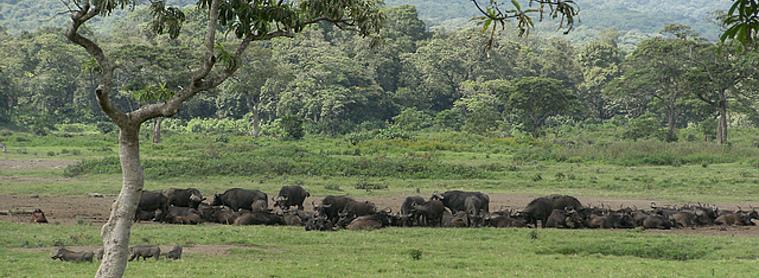 Rien de tel que de se plonger dans la littérature tanzanienne pour s'imprégner de la destination