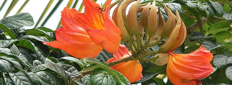 Une flore exceptionnelle