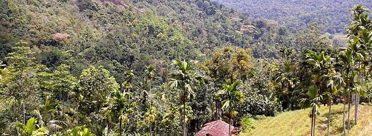 Les plantations de thé au coeur des montagnes sont à ne pas manquer