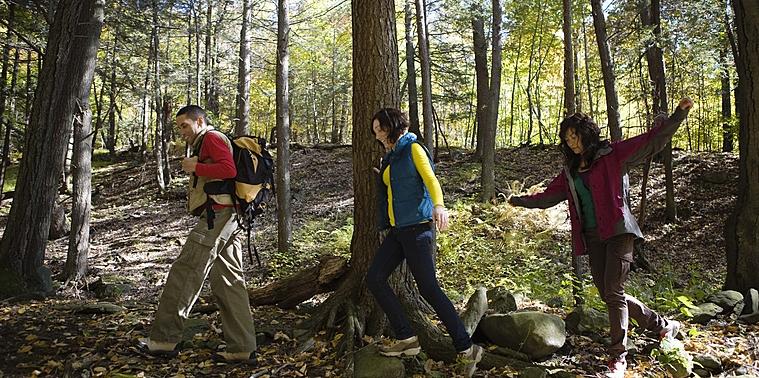 Trek en forêt