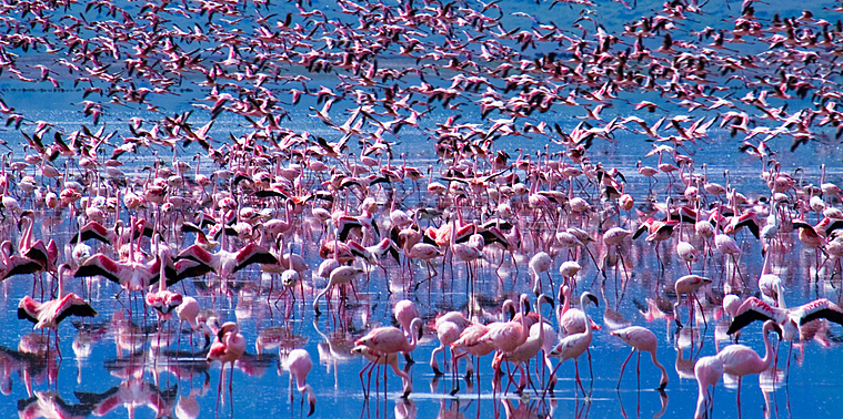 En Tanzanie, découvrez une faune et une flore exceptionnelle...