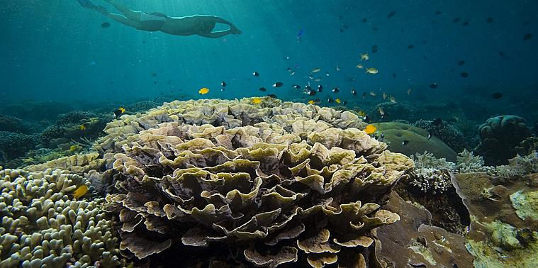 Un large panel d'activité sur terre ou sous mer en Indonésie
