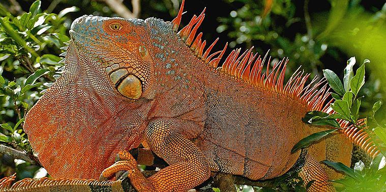 Faune Costa Rica