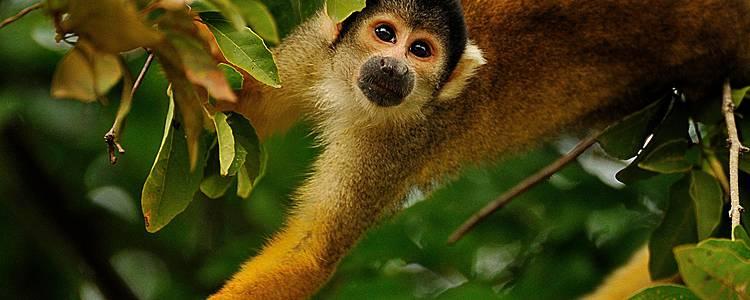 Dschungel und Pampas - Abenteuer Amazonas