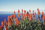 L\'île aux fleurs