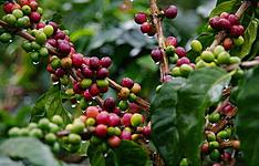 Des plantations de café aux plages exotiques de la région du choco