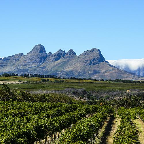 Route des vins et côte Ouest - Le Cap -