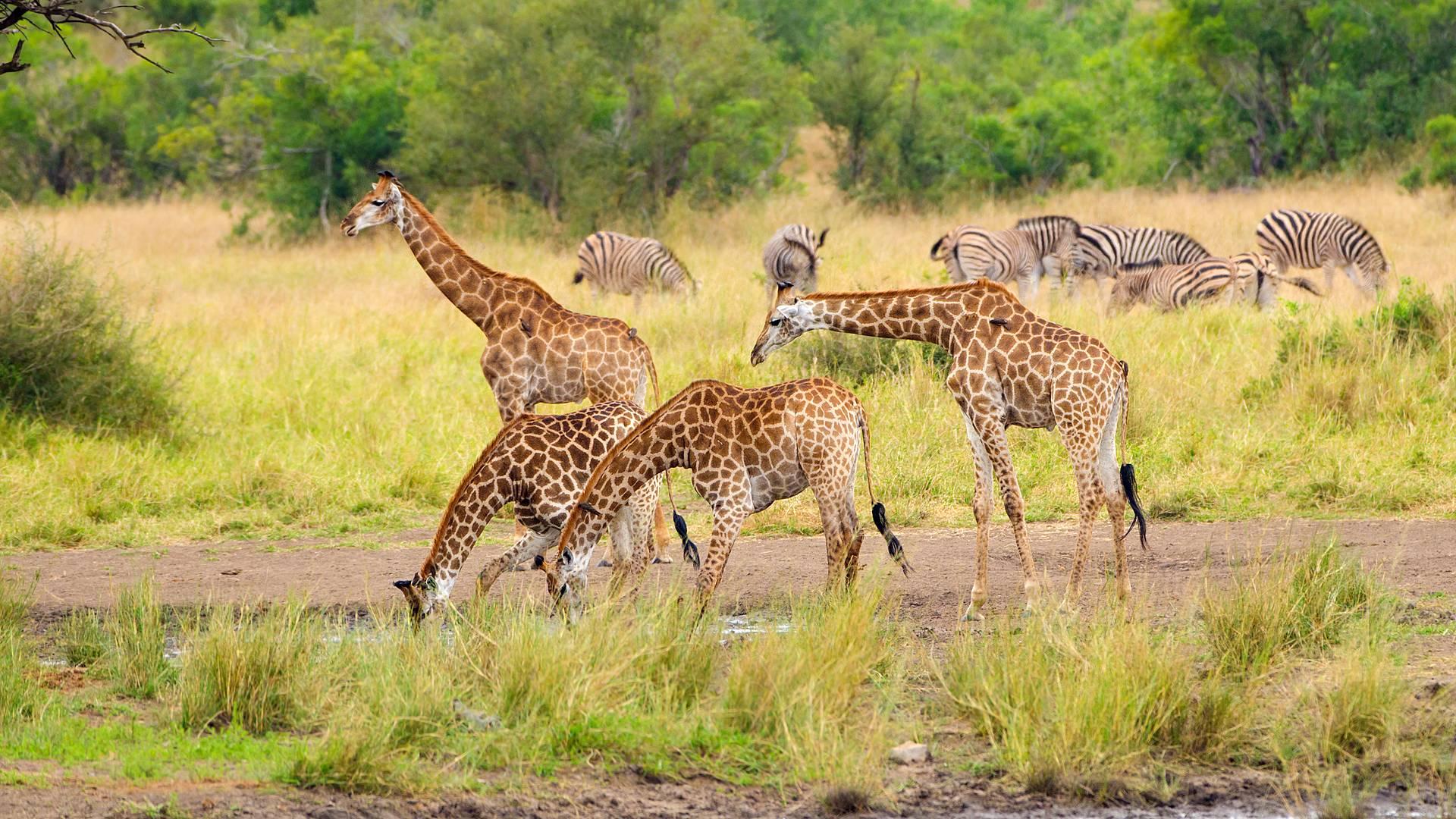 Safari à l'infini, Kruger légendaire