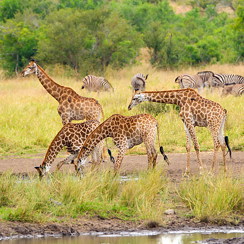 Safari à l'infini, Kruger légendaire - Johannesbourg -