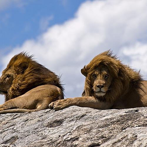 Au pays des lions du désert - Windhoek -