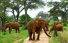 Pistes de Tanzanie et soleil de Zanzibar