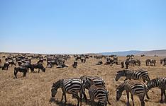 Incontournables de la Tanzanie en petit groupe