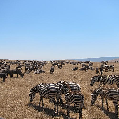 Incontournables de la Tanzanie en petit groupe - Arusha -