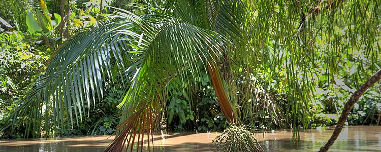 Immersione nella natura amazzonica