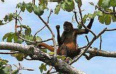 Les incontournables du Costa Rica en liberté
