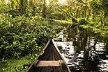 Les Sundarbans