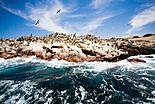 Les îles Ballestas