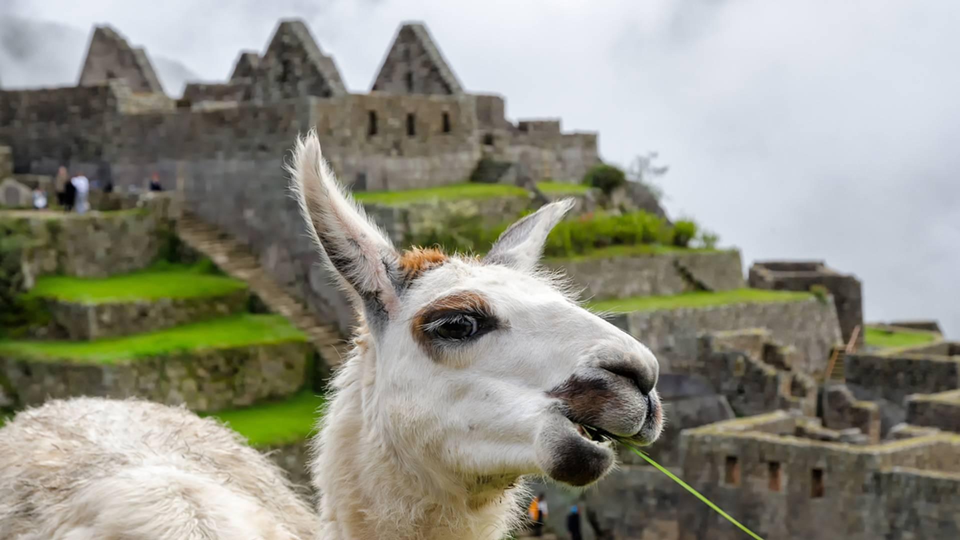 Als Familie das Reich der Inka und den Regenwald entdecken