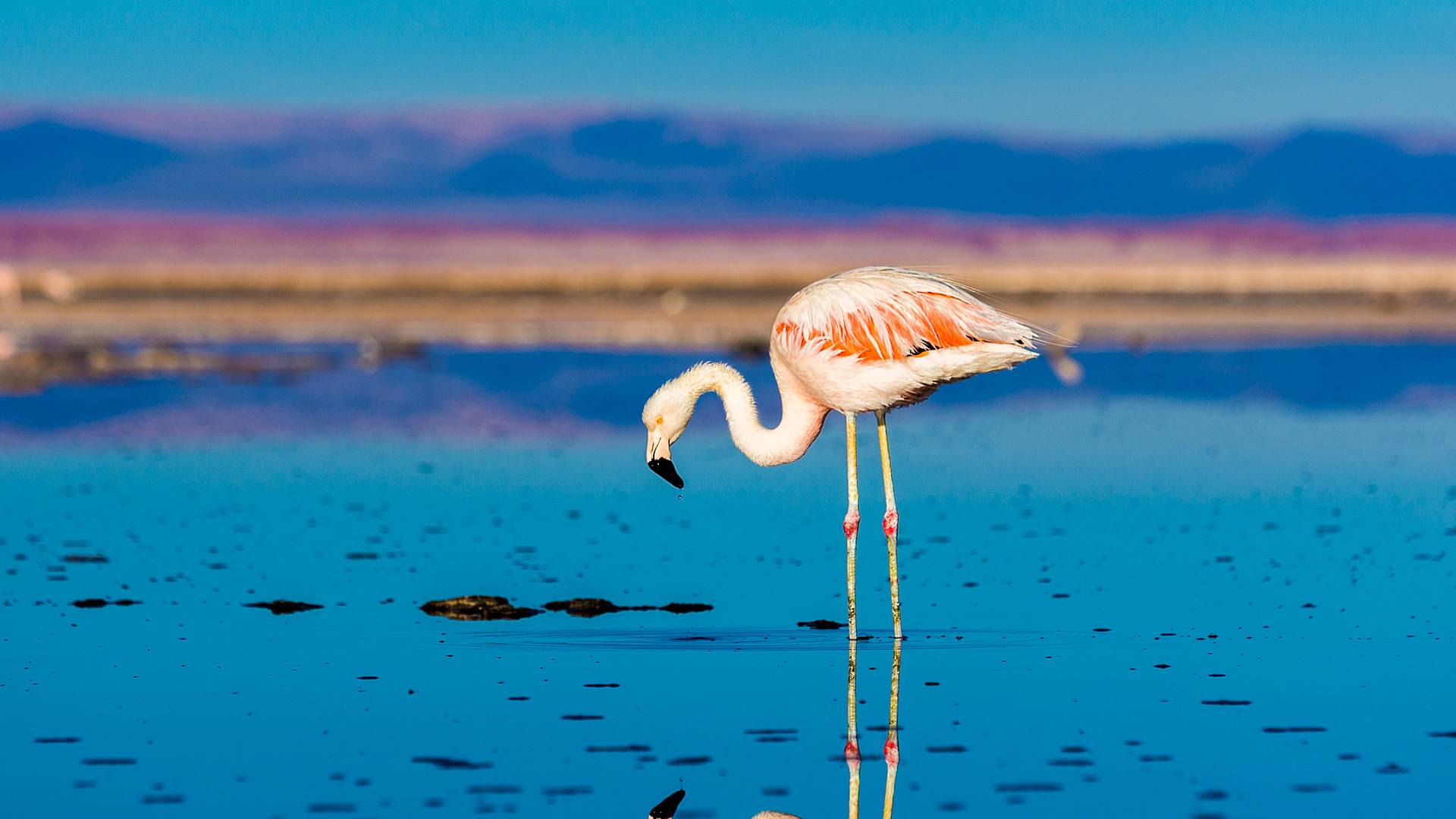 Atacama, Patagonia e Isola di Pasqua