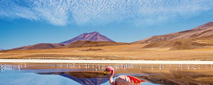 Deserti di sabbia e sale, montagne e lagune