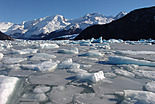 Calafate y Los Glaciares