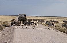 Safari inoubliable en famille
